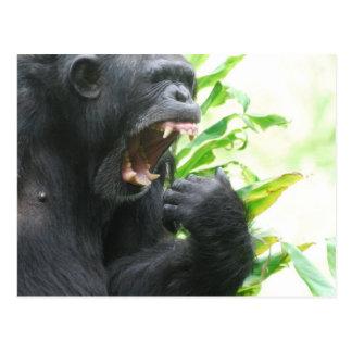 Postal de los colmillos del chimpancé