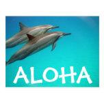 Postal de los delfínes de Hawaii
