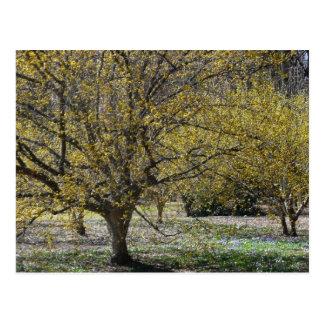 Postal de los Dogwoods de la cereza de cornalina