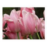 Postal de los festivales del tulipán
