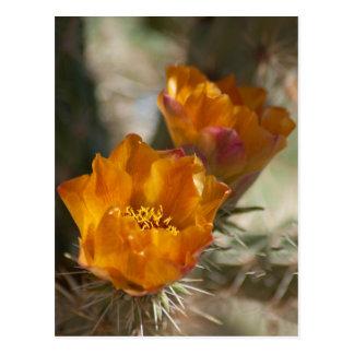 Postal de los flores del cactus de Staghorn Cholla