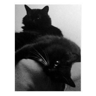 Postal de los gatitos del rescate