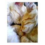 Postal de los gatitos del Snuggle
