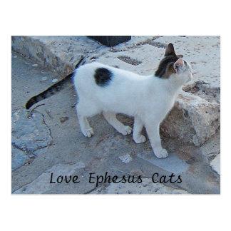 Postal de los gatos de Ephesus