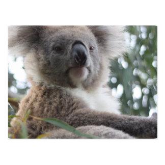 Postal de los hechos del oso de koala