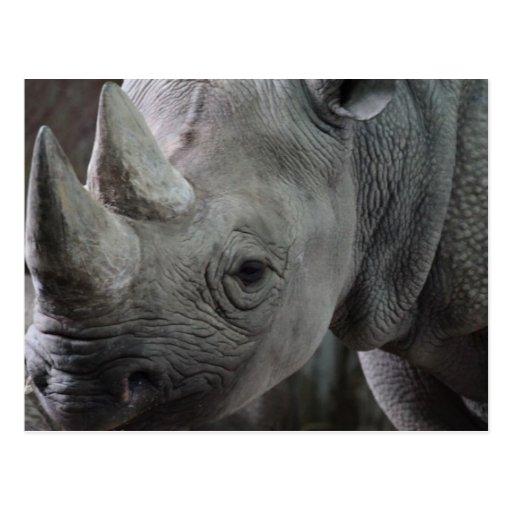 Postal de los hechos del rinoceronte