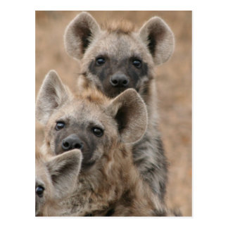 Postal de los Hyenas