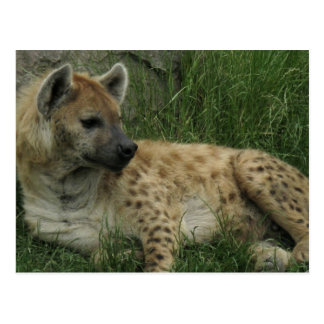 Postal de los Hyenas de risa