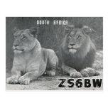 Postal de los leones de Suráfrica de la tarjeta de