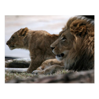 Postal de los leones