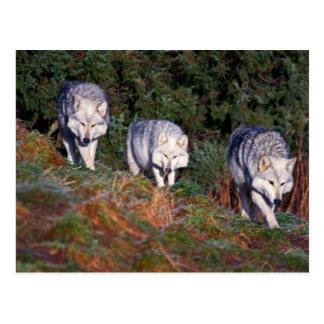 Postal de los lobos