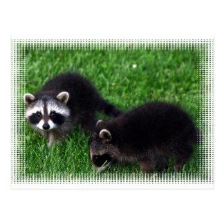 Postal de los mapaches del bebé