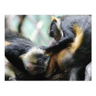 Postal de los monos de Guenon