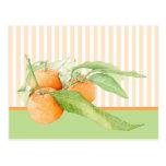 Postal de los naranjas de la clementina