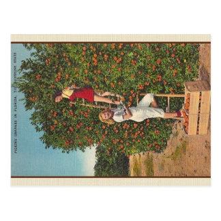 Postal de los naranjas de la Florida del vintage