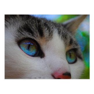 Postal de los ojos de gato azul