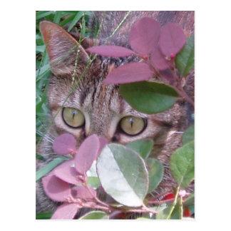Postal de los ojos de gato del resplandor