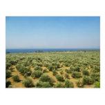 Postal de los olivos