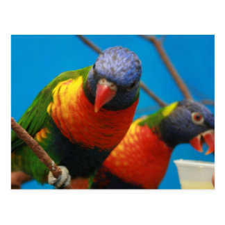 Postal de los pájaros de los Lories