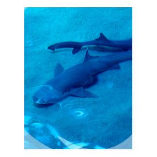 Postal de los pares del tiburón