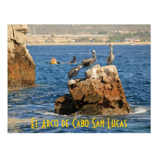Postal de los pelícanos de El Arco de Cabo San Luc