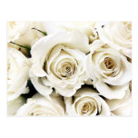 Postal de los rosas blancos