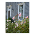 Postal de los rosas de Nantucket