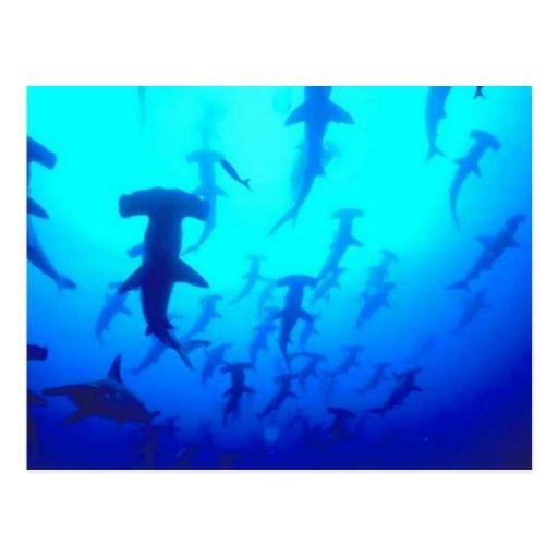 Postal de los tiburones