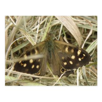 Postal de madera manchada de la mariposa