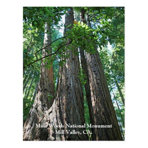 Postal de maderas de Muir