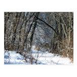 Postal de maderas Nevado