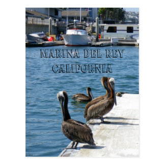 ¡Postal de Marina Del Rey Belicans! Tarjetas Postales