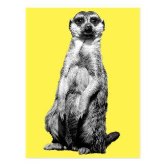 Postal de Meerkat