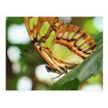 Postal de observación de la fotografía de la natur