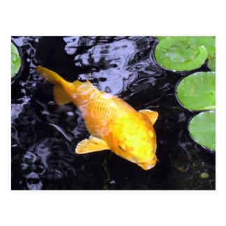 Postal de oro de la foto de los pescados de Koi