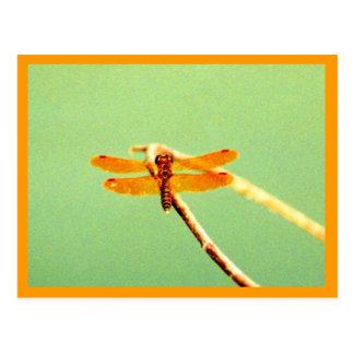 Postal de oro de la libélula