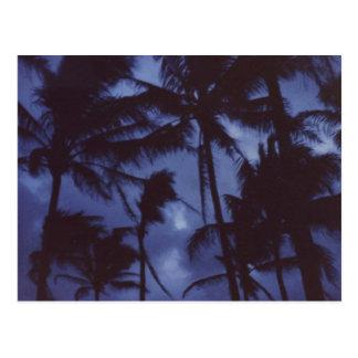 Postal de PalmTrees del claro de luna