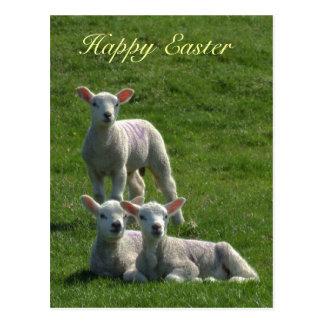 Postal de Pascua de los corderos