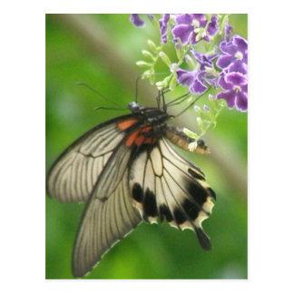 Postal de polinización de la mariposa