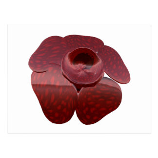 Postal de Rafflesia