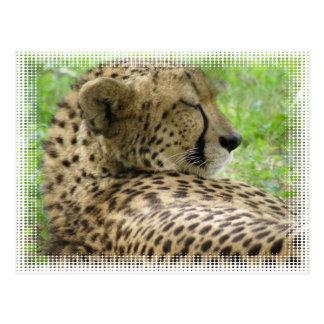 Postal de reclinación del guepardo