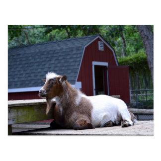 Postal de refrigeración de la cabra