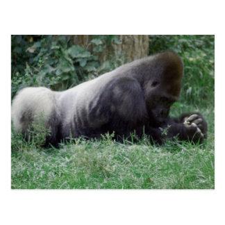 Postal de rogación del gorila