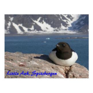 Postal de Spitsbergen del pequeño Auk