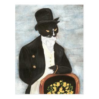 Postal de Sr. Darcy Cat