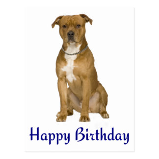 Postal de Staffordshire americano Terrier del cump