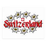 Postal de Suiza Edelweiss