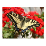 Postal de Swallowtail del anís