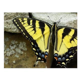 Postal de Swallowtail del tigre