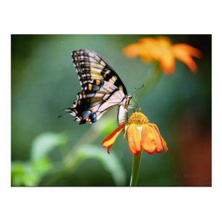 Postal de Swallowtail y de Tithonia
